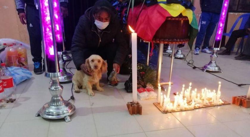 """""""Cualsito"""", el perro que se accidentó con su tutor y fue a """"pedir ayuda"""""""