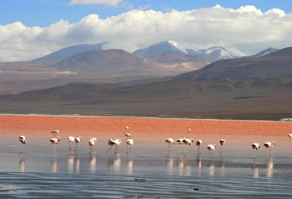 Este atractivo turístico se encuentra dentro de la Reserva Nacional de Fauna Andina Eduardo Abaroa.