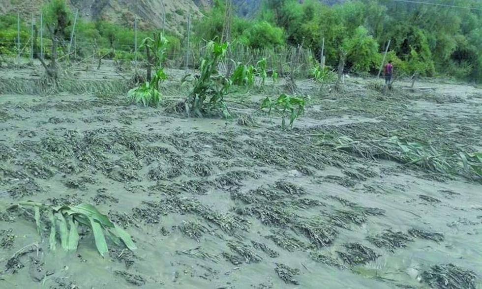 El 100 por ciento de los cultivos fueron afectados en Cotagaita.