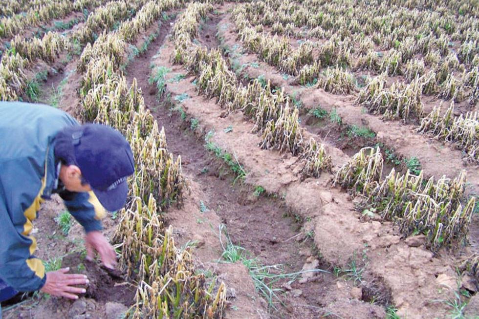 Los desastres naturales afectaron a más de 9 mil hectáreas de cultivos