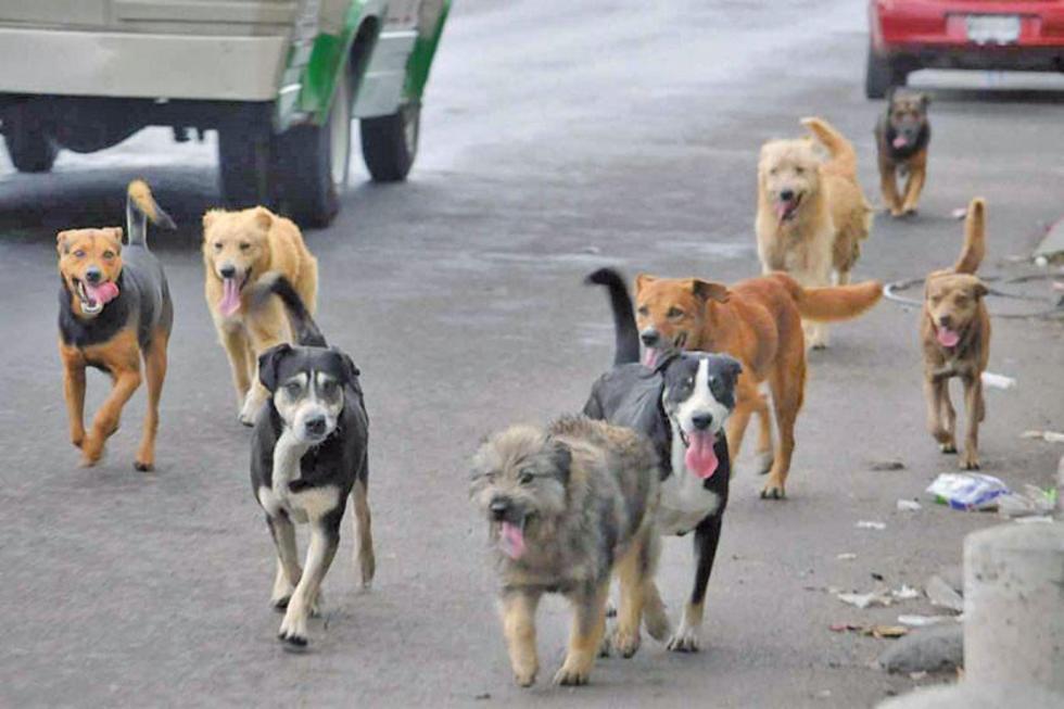 Alcaldía esteriliza a canes para evitar su expansión en Potosí