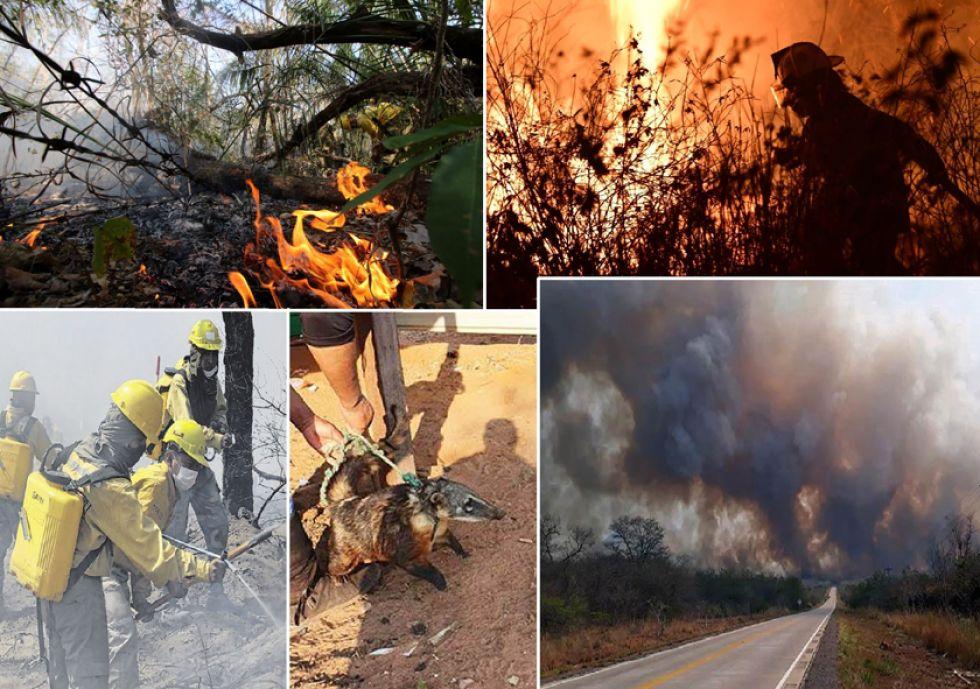 El fuego afecta al menos 5 municipios de Bolivia: Roboré, San Ignacio, San José, Carmen Rivero y San Matías.