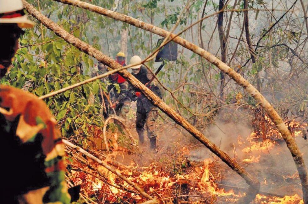 Más de 900 mil hectáreas quemadas corresponden a áreas protegidas.