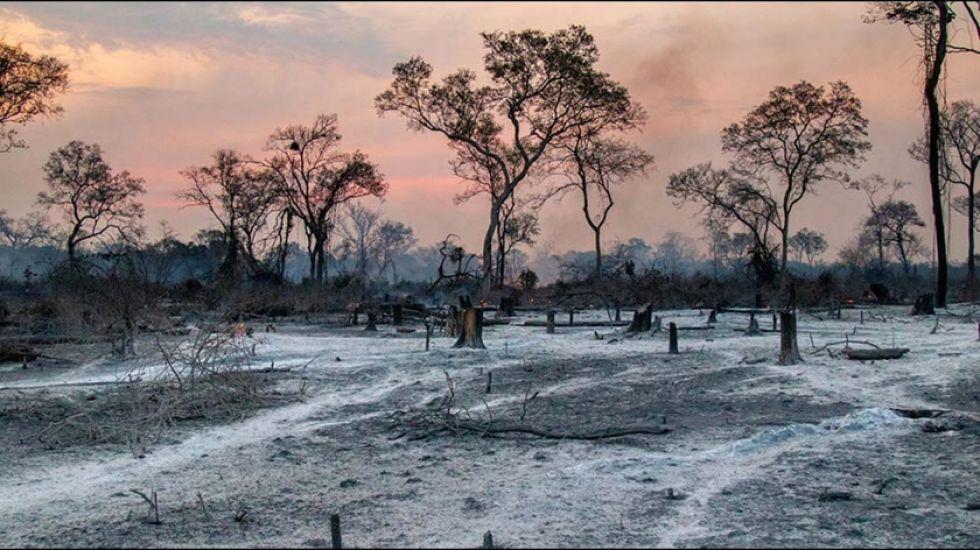 Se calcula que el 45 % de las zonas afectadas son de áreas protegidas