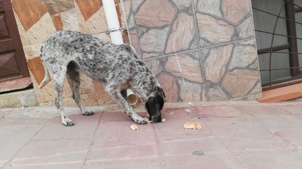 Era alimentado en la calle Bolívar a mediodía.