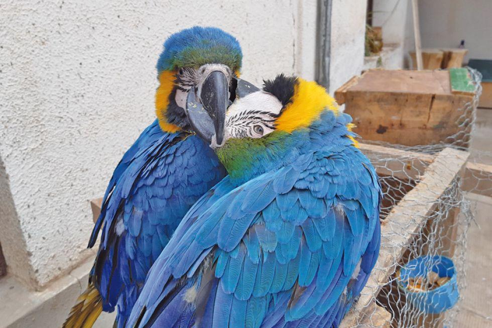 Rescatan aves  y las envían a un parque a rehabilitarse
