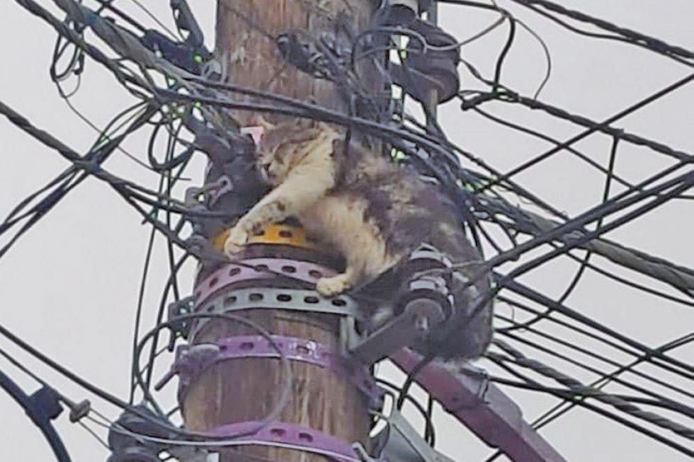 El gato atrapado entre los cables en una foto que se hizo viral.