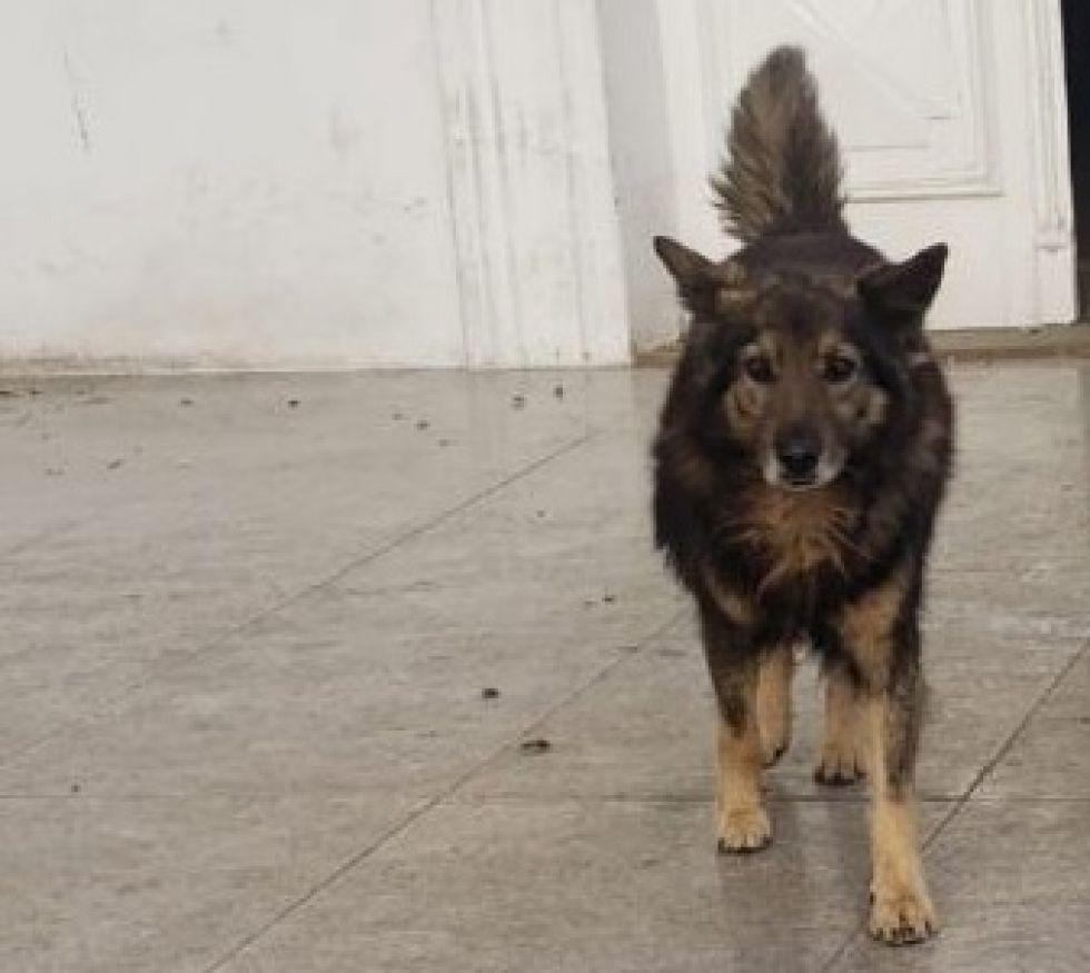"""Sucre: conoce la historia del perro """"Motín"""", que lleva cinco años cuidando la última morada de su tutor"""