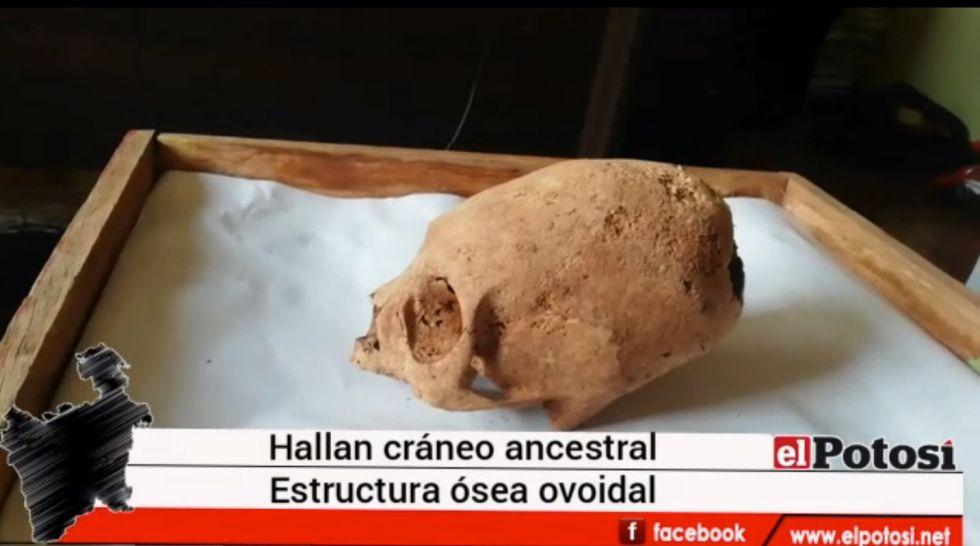 Hallan cráneo con extraña deformación al de un alienígena