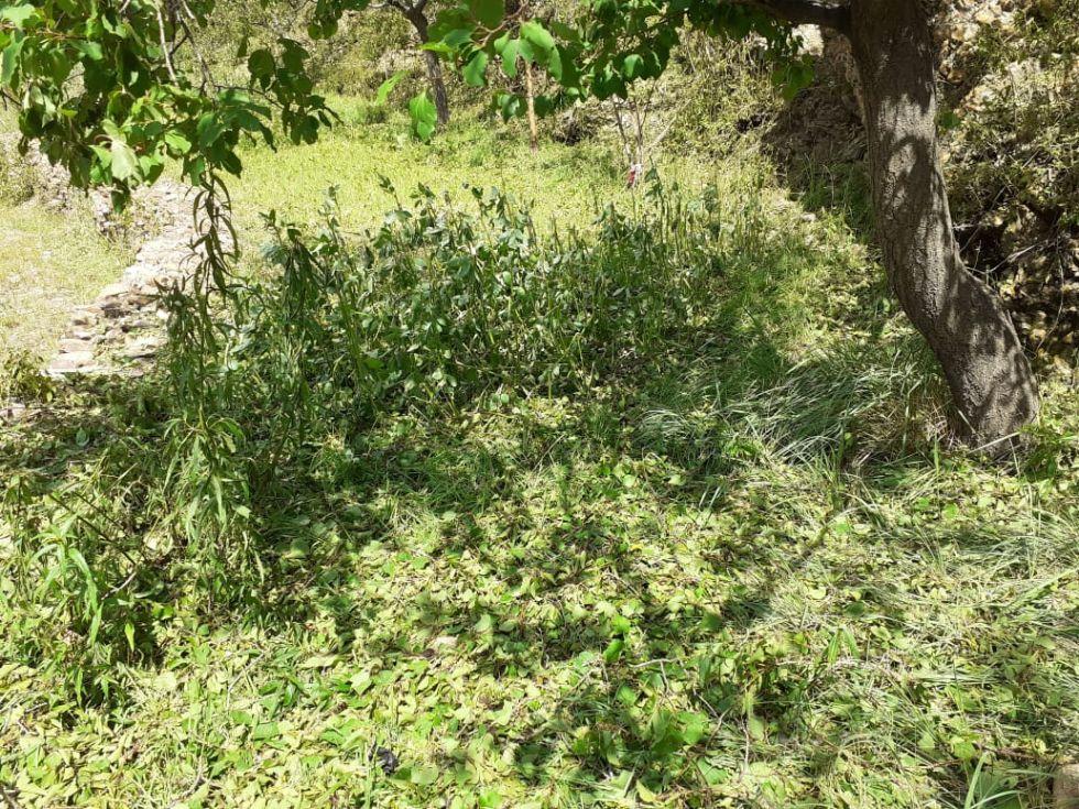 La granizada afectó viviendas, animales y cultivos en Tupiza