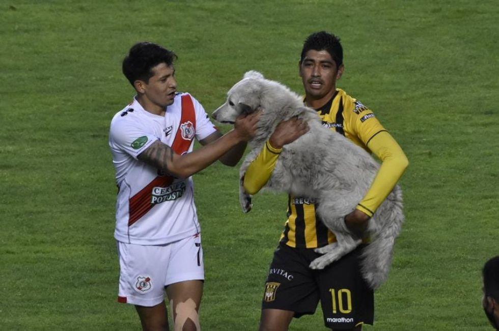 Interrumpió  en el encuentro entre The Strongest y Nacional el jueves pasado. FOTO  Jorge Mamani