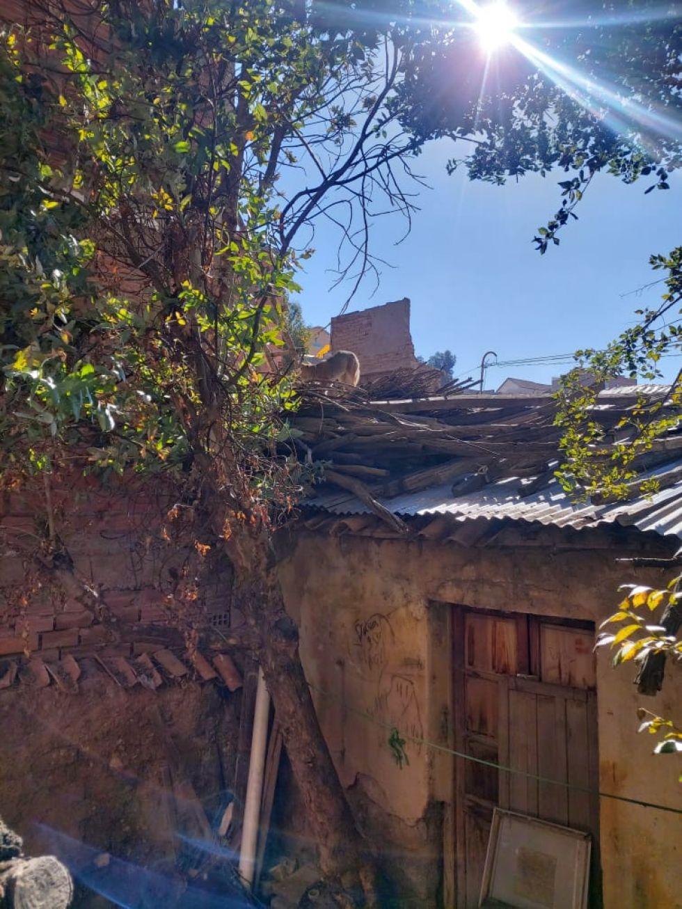 El responsable de Zoonosis del Gobierno Municipal de Potosí, Omar Berazain, informó que se trataría de una zorra y deduce que algún vecino la crió