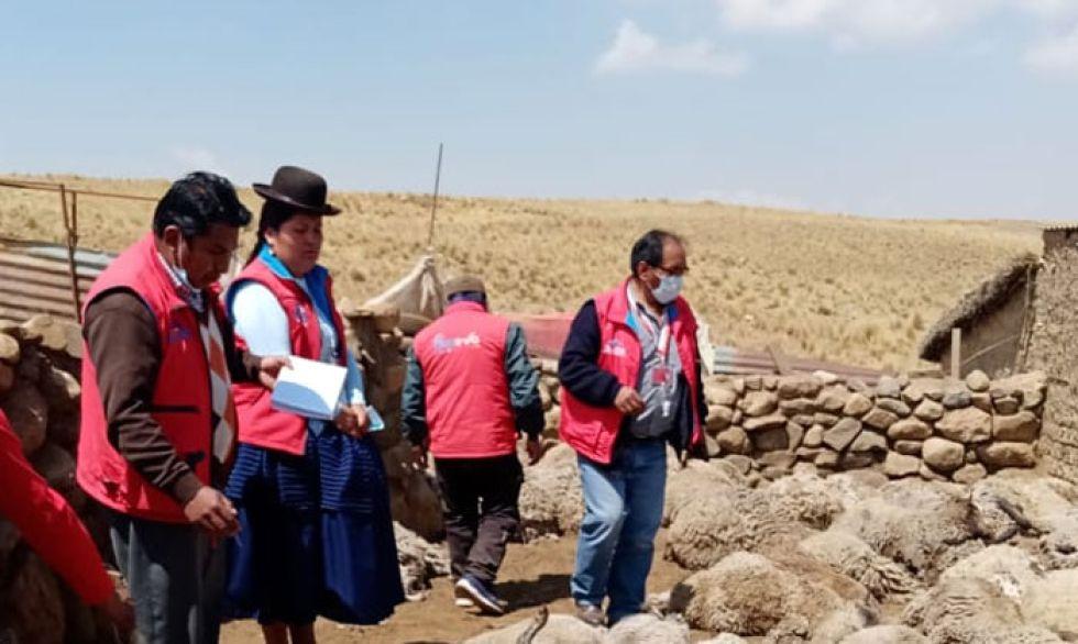 El Alto: Atrapan al 'alfa' de jauría de perros que habría atacado a ganado en El Alto y analizan qué sucederá con él