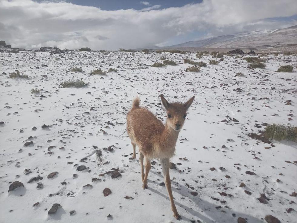 Así fue la nevada en Quetena Chica